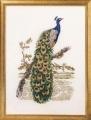 Peacock Chart
