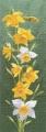 Daffodil Panel Chart