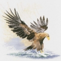 Eagle in Flight Chart