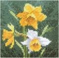 Mini Daffodils Chart