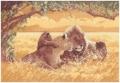 Lions Chart