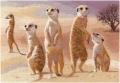 Meerkats Chart