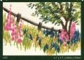 Echinacea Mini Kit