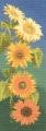 Sunflower Panel Chart