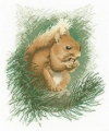 Red Squirrel Chart