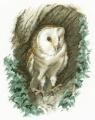 Barn Owl Chart