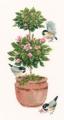 Topiary Rose Chart